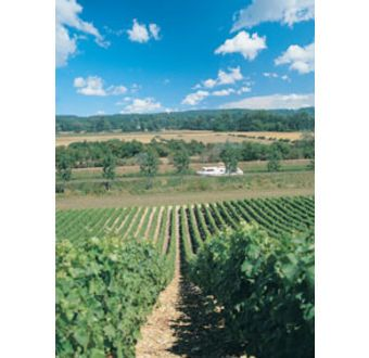 Sancerre - Bourgogne NL