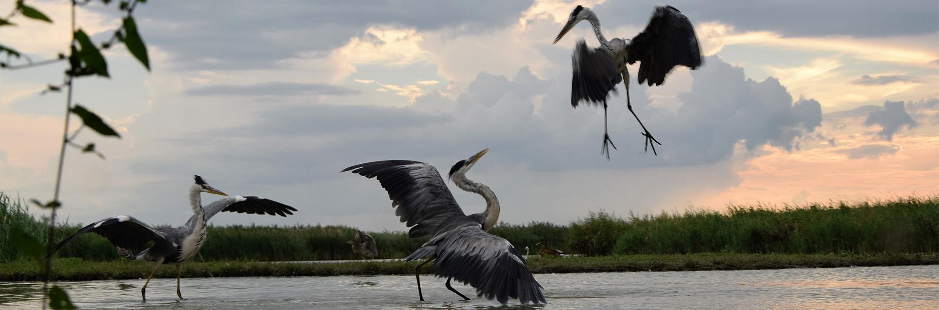 Fugler i Ungarn